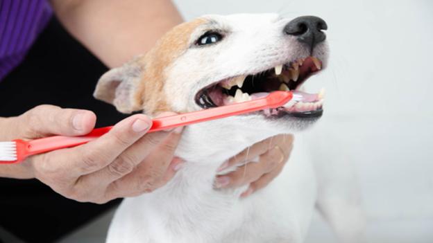 dog dental hygiene tips from berry hill veterinary center in oregon city